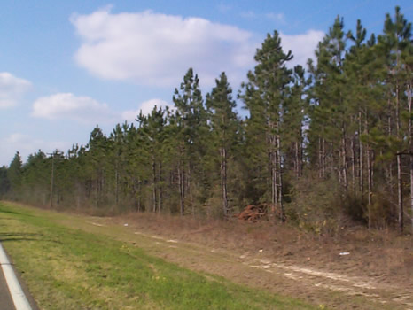 91.57 Acres : Marianna : Calhoun County : Florida