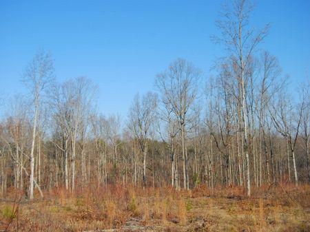 35.5 Acres Near Gaffney : Gaffney : Cherokee County : South Carolina