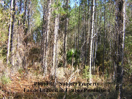 176.45 Acres REDUCED : Perry : Taylor County : Florida