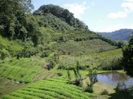 Mountain Coffee Farm & Ponds : Orosi : Costa Rica