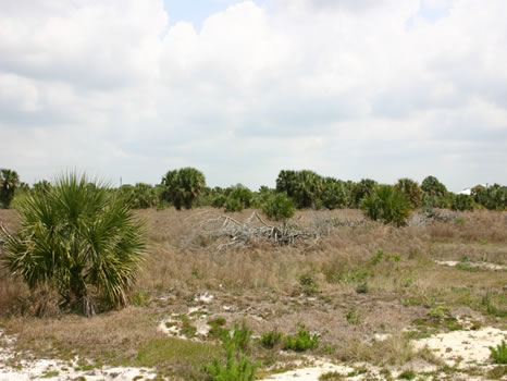 10 Acres Perfect for Horses : Sebastian : Indian River County : Florida