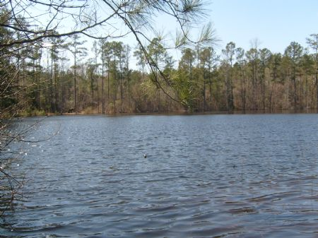 Marion Pond Retreat Tract : Buena Vista : Marion County : Georgia