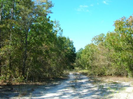 24 Acres Lot 6 Oak Hill : Trenton : Gilchrist County : Florida