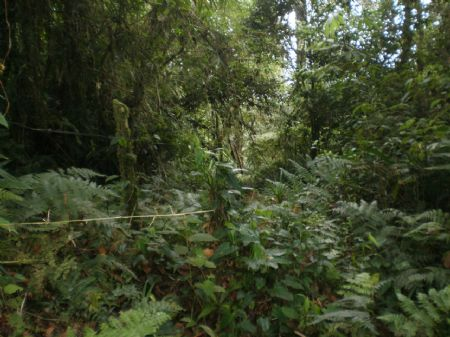 17.63 Acres - Nature Lovers Retreat : Orosi : Costa Rica