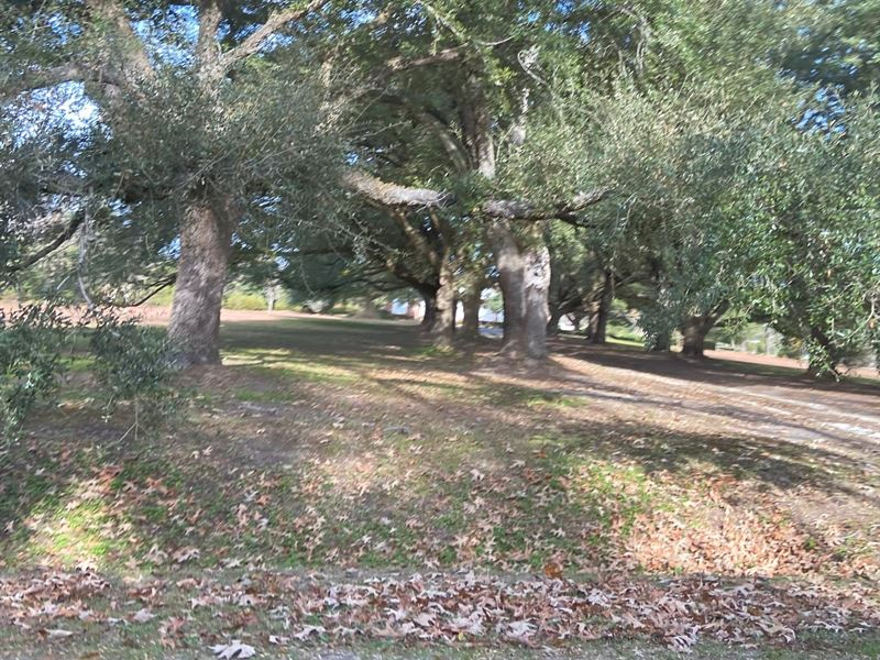 Capitola River Front Hunting Land : Johnsonville : Florence County : South Carolina