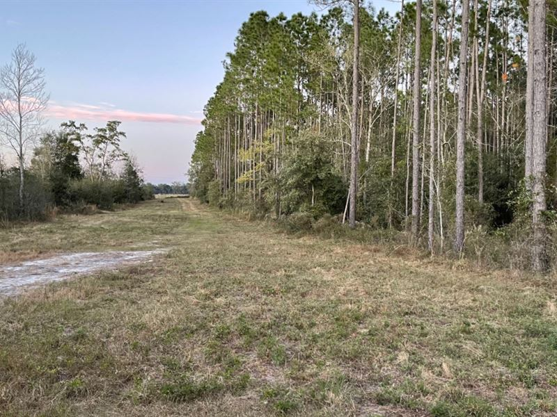 10 Acres Available Private S/D : Live Oak : Suwannee County : Florida