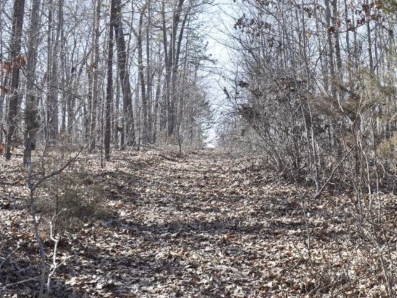Treed 39.61 Ac Land for Sale in MO : Eminence : Shannon County : Missouri