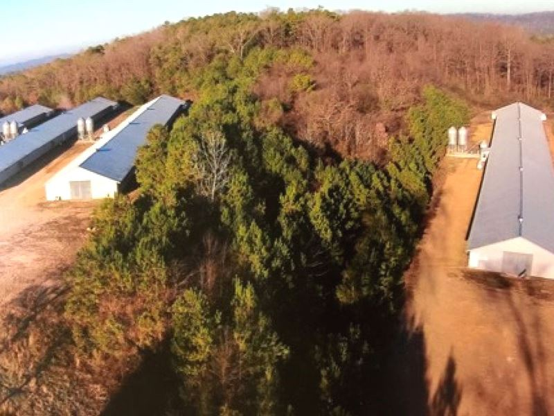 Pullet Farm with 24 Acres : Lincoln : Talladega County : Alabama