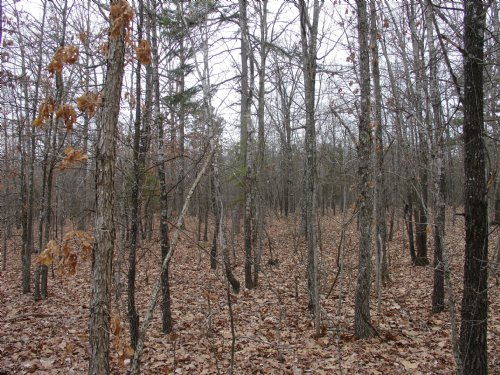 Barnes Hollow Land In The Ozarks : Summersville : Shannon County : Missouri