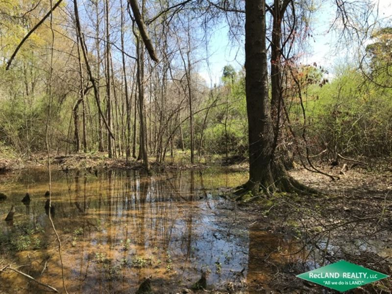 48 Ac, Wooded Tract For Home : Downsville : Union Parish : Louisiana