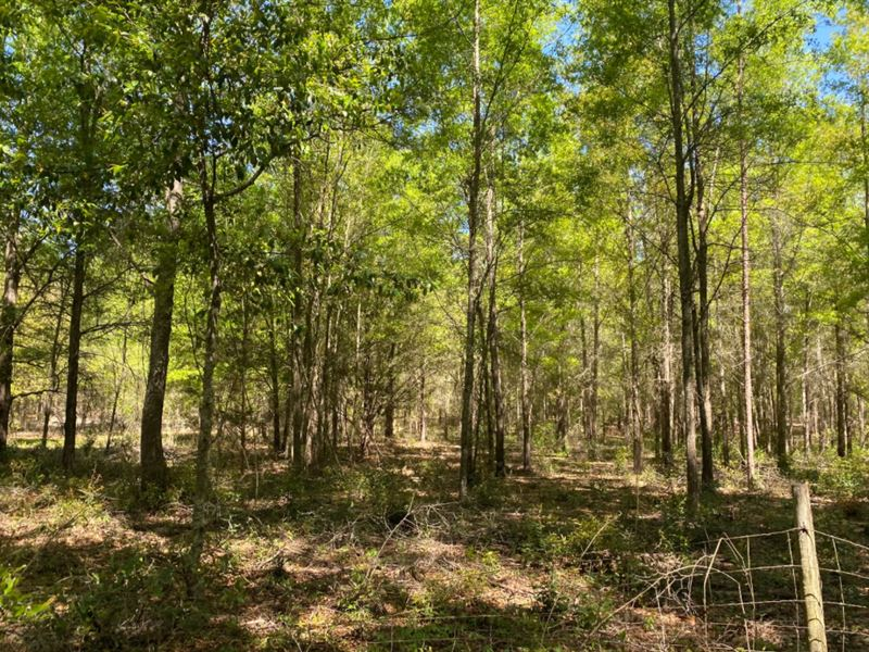 Wooded Acreage Live Oak, Florida : Live Oak : Suwannee County : Florida