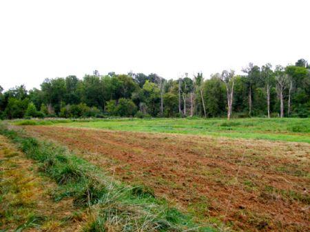 Enoree River Duck Impoundment : Union : South Carolina