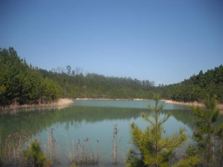 3 Ponds On 115 Acres For $1575/acre : Jeffersonville : Twiggs County : Georgia