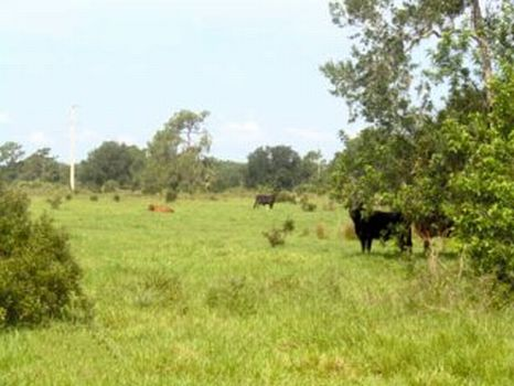 Okeechobee Ranch & Development : Okeechobee : Florida