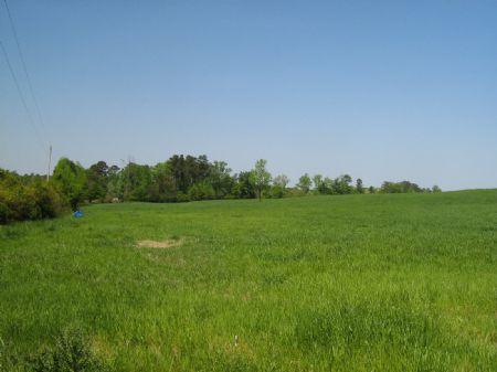 68.9 Acres Of Beautiful Pasture : Stephens : Oglethorpe County : Georgia