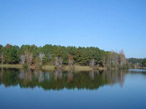 Perfect 450 Acre Hunt Camp : Union Springs : Bullock County : Alabama