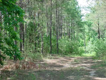 420+ - Acres....Will Divide : Curtis : Coffee County : Alabama