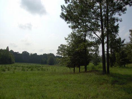 84 Acres Plus 2 Homes : Madison : Morgan County : Georgia