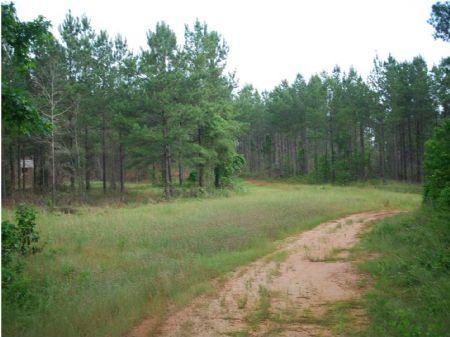Reedy River Timber Tract : Simpsonville : Greenville County : South Carolina