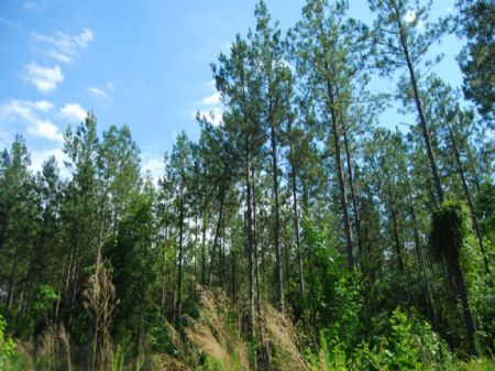 Recreational Timberland Investment : Terrapin Rd : Union County : South Carolina
