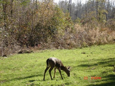 71.37 Acres : Highland Home : Crenshaw County : Alabama