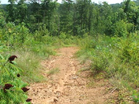 Cheap 53 Acres In National Forest : Brent : Perry County : Alabama
