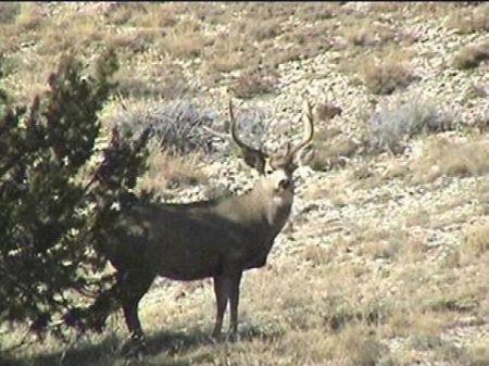 Lender Owned Ranch : Colorado City : Huerfano County : Colorado