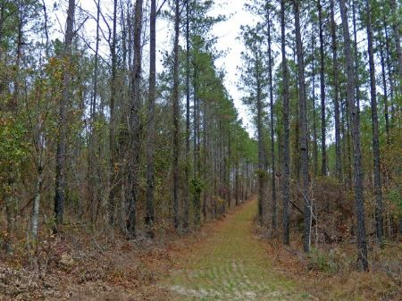 Midsize Hunting Tract With Big Deer : Sandersville : Washington County : Georgia