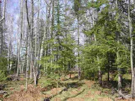 Tbd Co Rd 581 Mls#1074271 : Felch : Dickinson County : Michigan