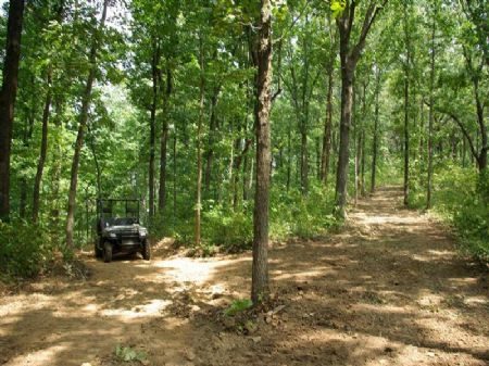 Armstrong West -  280 Ac Tract : Ashville : St. Clair County : Alabama