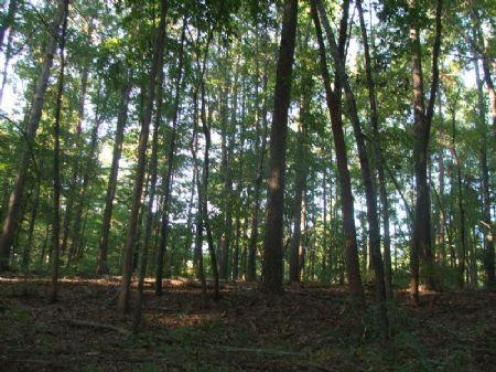 18.1 Acre Hunting Or Rural Getaway : Folsom : Perry County : Alabama