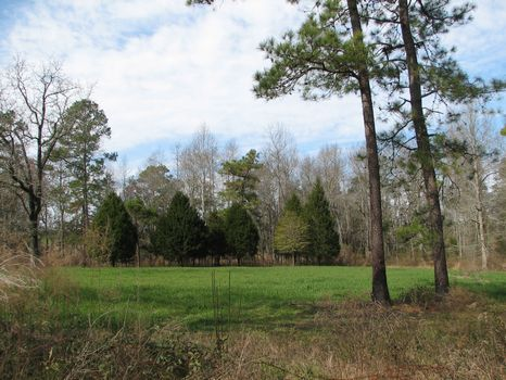 111 Acres W/Pond : Metter : Candler County : Georgia