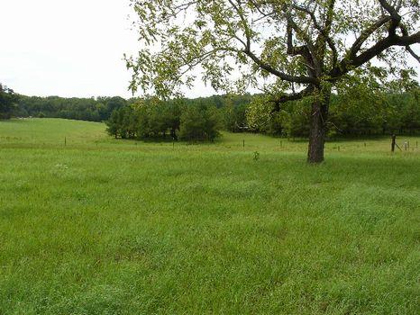 36.2 Acres : Union Springs : Bullock County : Alabama