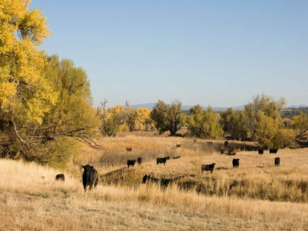 5,987 Acres  Willow Creek Ranch : Watrous : Mora County : New Mexico