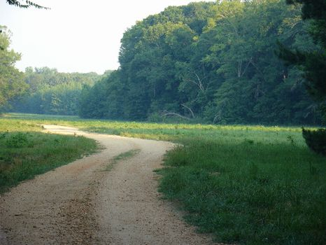 1362 Acres of Natural Wonder : Hardaway : Macon County : Alabama