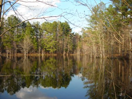 176 Acre Hunting Tract With Pond : Union Point : Oglethorpe County : Georgia
