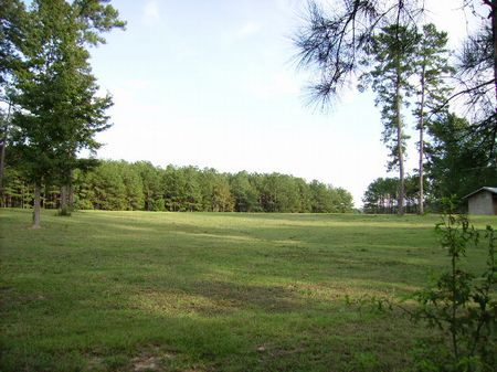Bring The Horses :  What a Deal : Fort Valley : Peach County : Georgia