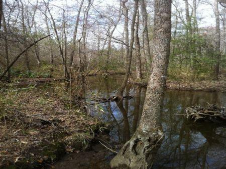 69 Acres : Gordon : Wilkinson County : Georgia