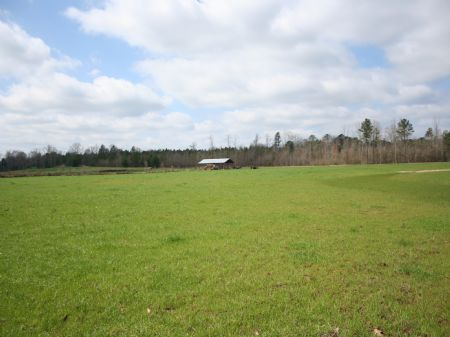 208 Acre Horse Or Cattle Farm : Forest : Scott County : Mississippi