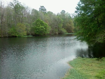 884.5 Acres : Georgetown : Clarendon County : South Carolina
