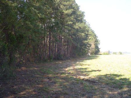 Howle Tract : Darlington : South Carolina