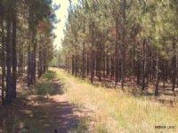 Blue Run Ranches - 1,207 Acres : Dunnellon : Marion County : Florida