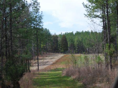 385 Acre Timberland / Recreational : Union : South Carolina