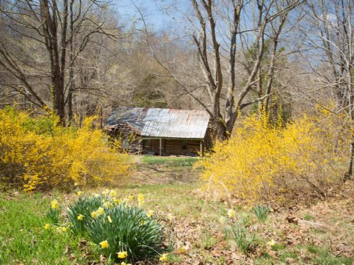 73 Acres With 1890's Log Cabin : Cunningham : Dickson County : Tennessee