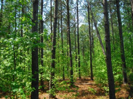 21.7 Acres Recreational Tract : Cross Anchor : Spartanburg County : South Carolina