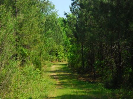 74 Acre Timber / Recreational Tract : Cross Anchor : Spartanburg County : South Carolina