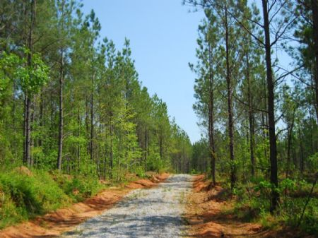 36 Acre Timberland / Recreational : Cross Anchor : Spartanburg County : South Carolina