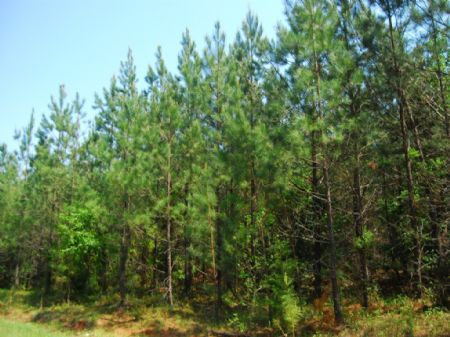56 Acre Upstate Recreational Tract : Cross Anchor : Spartanburg County : South Carolina