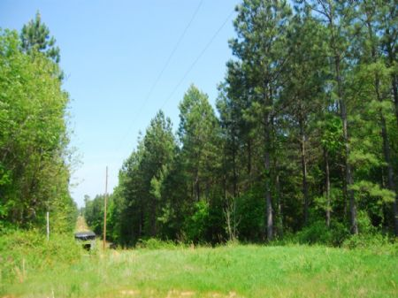 92 Acre Timber Investment Tract : Cross Anchor : Spartanburg County : South Carolina