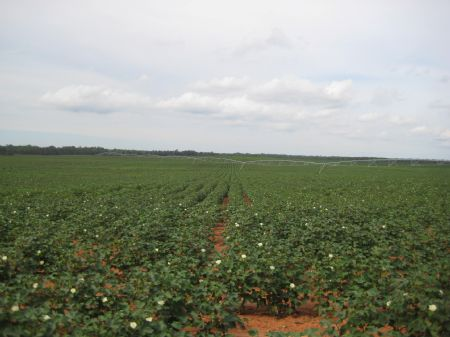 Prime Irrigated Farmland : Americus : Sumter County : Georgia